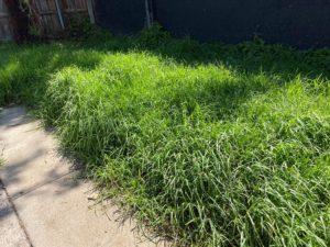 lawns needing mowing